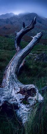 Dead tree, North England.
