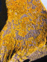 Lichenised boulder, Newport City, Wales