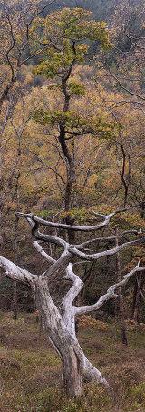 Oak wood, Elan Valley, Wales, UK