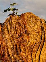 Old stump, Newport City, Wales