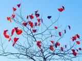 Leaves, Newport, Wales.