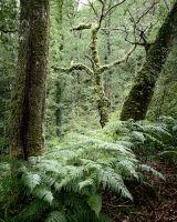 Capel Curig Wood, Snowdonia, Wales
