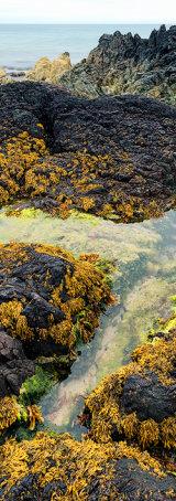 Beach detail, Wales.