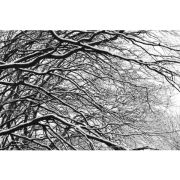 'Branches in the Snow' (PIC015)