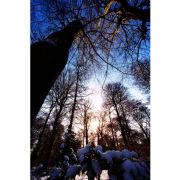 'Nettlebed Snow' (PIC059)