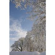 'Snowveins' portrait (PIC094)