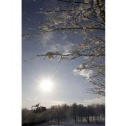 'Snowrise II' (PIC095)