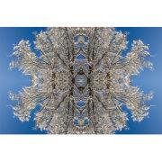 'Snowflake' (SPAT098)