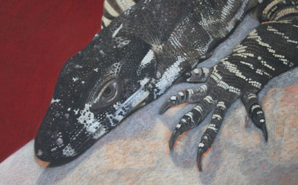 'By Design' Lace Monitor