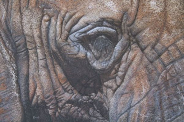 'A Wrinkle In Time' African Elephant