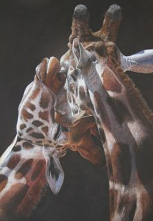 'The Kiss' Giraffe.