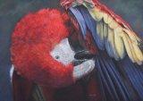 'Sticky Beak'