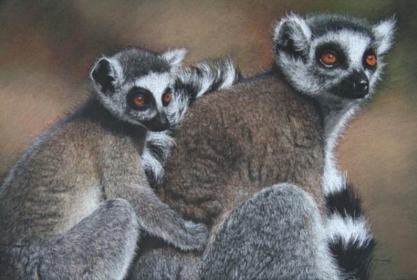 Lemur Cuddle