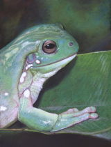 'It's Easy Being Green' Green Tree Frog