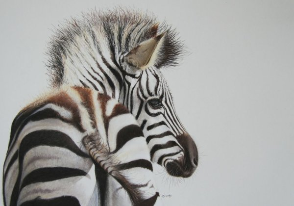 'Young Stripes'