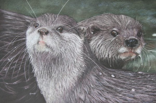'Otterly Gorgeous'