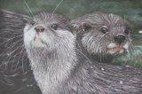 'Otterly Gorgeous'