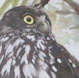 'Owlishness'   Barking Owl