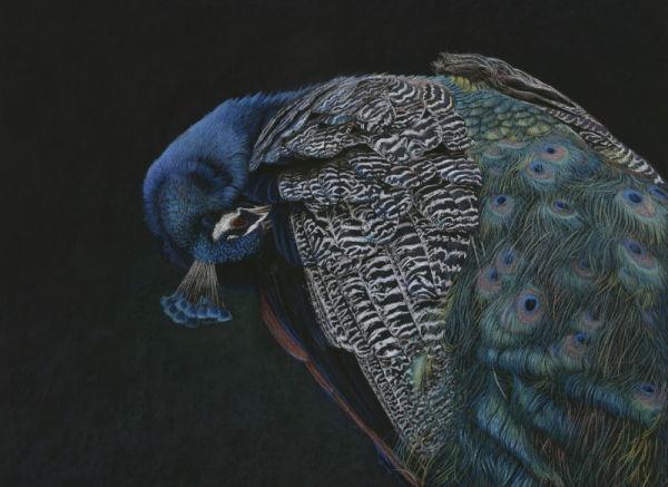 'The Immortal'    Peacock