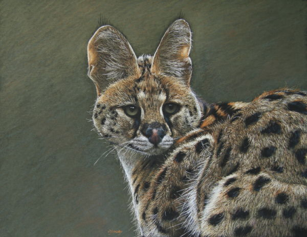 'Spot On' African Serval.