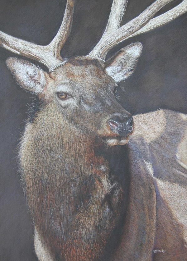 'Oh Deer!''