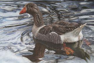 'Take a Gander.' Goose