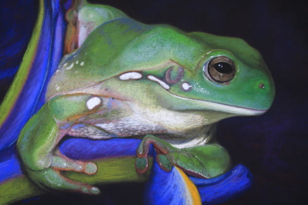 'You Promised Crickets' Green Tree Frog.