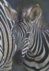 Youthful Stripes Plains Zebra