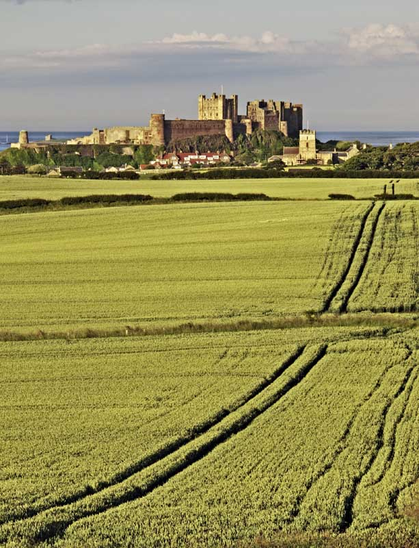 Bamburgh castle and wheatfields0025