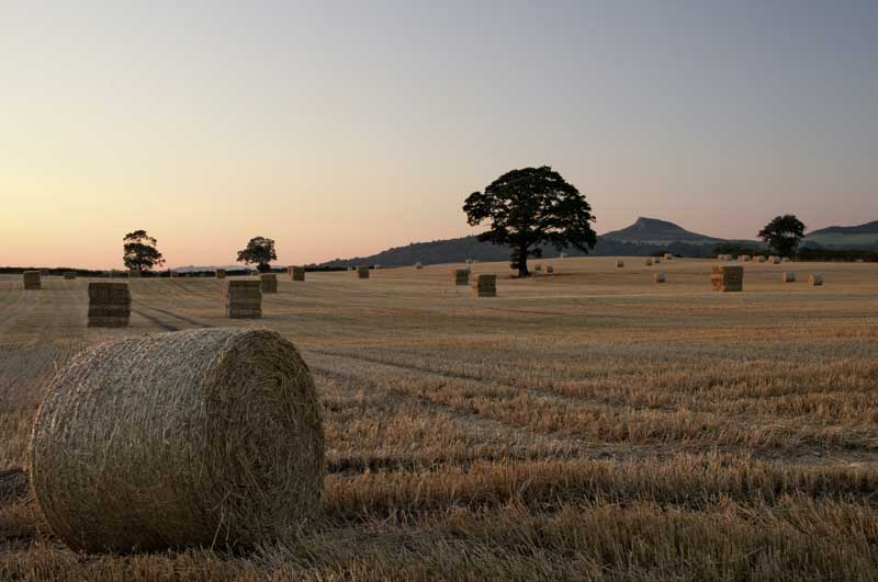 Easby harvest nightfall0024