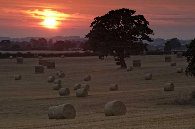 Harvest sunset0074