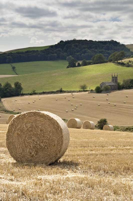 Luthrie harvest evening0071