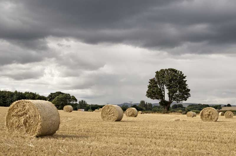 Straw bales and tree0013