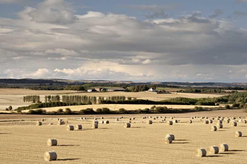 Farmland evening0027