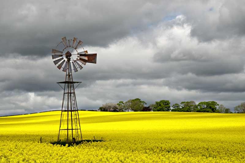 Wind pump in rape field0029