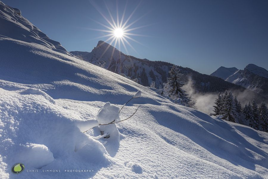 Alpine Vista V