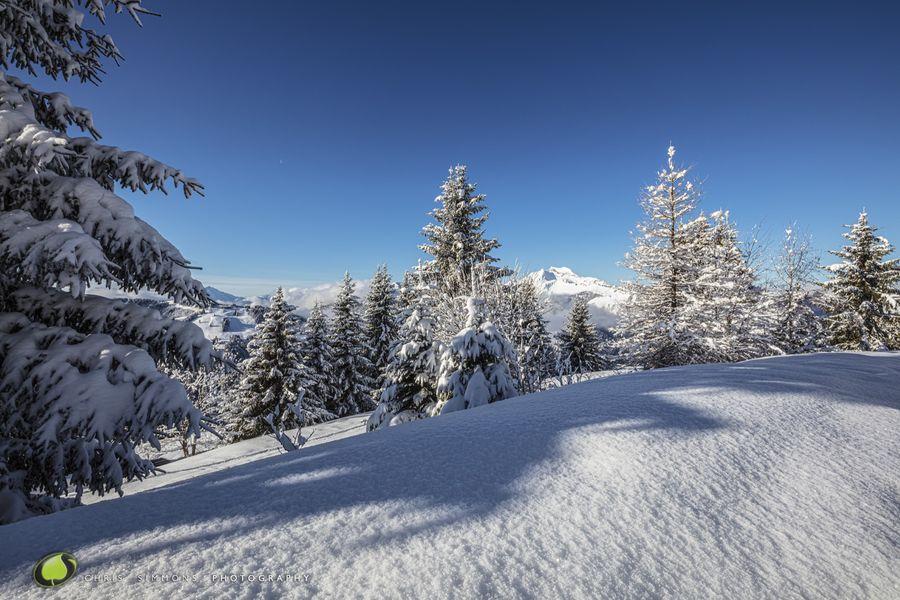 Alpine Vista VI