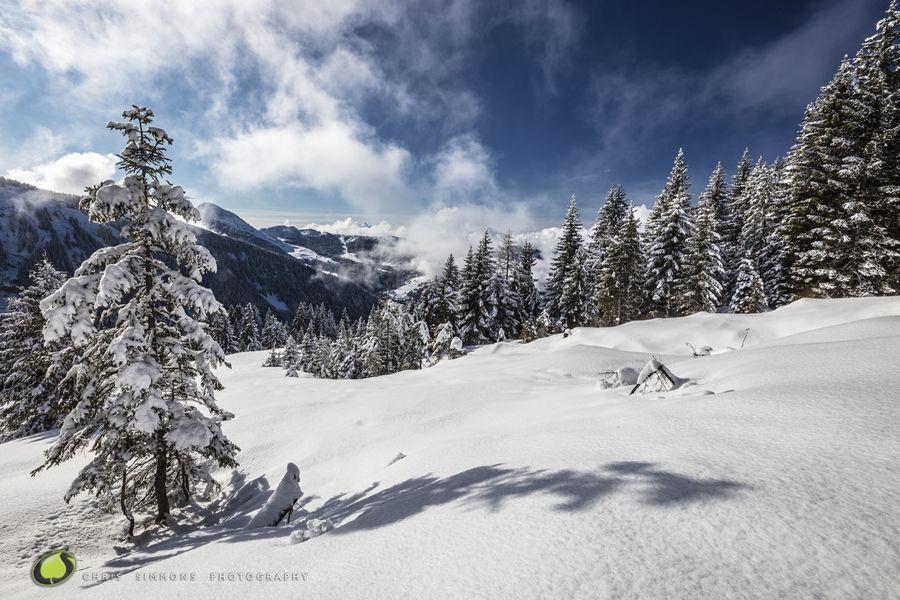 Alpine Vista VII