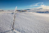 Arctic Vista