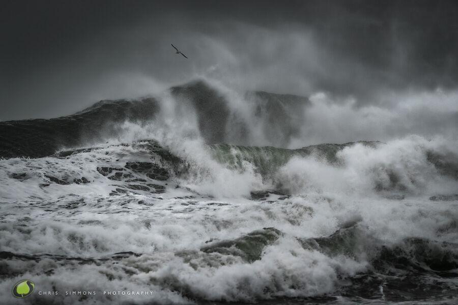 Atlantic Greys - Master