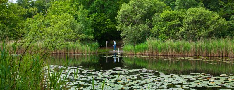 'Wandering' by a lake. Client: Joan Allen Electronics
