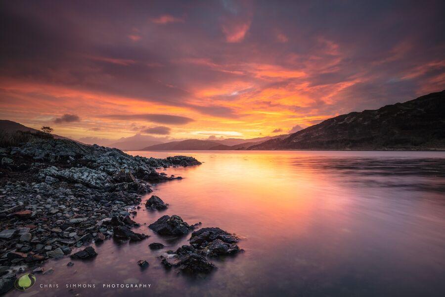 Carna Dawning Glory - (CCArt)