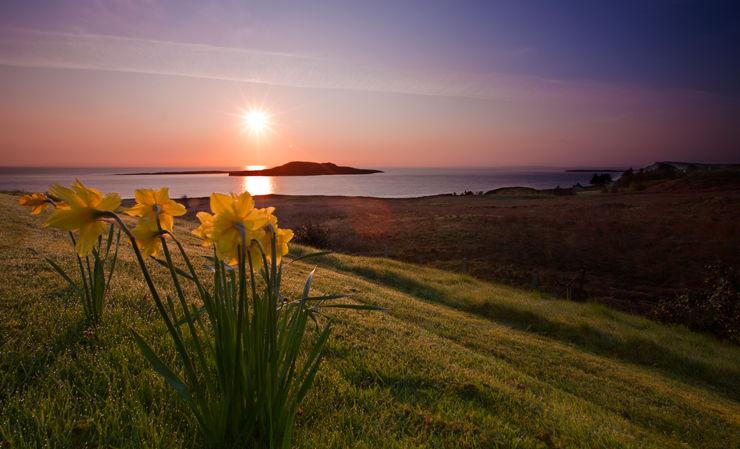 Dawn, Skye, Daffodils & Dew