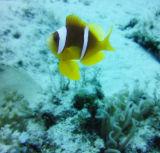 Reef VIII