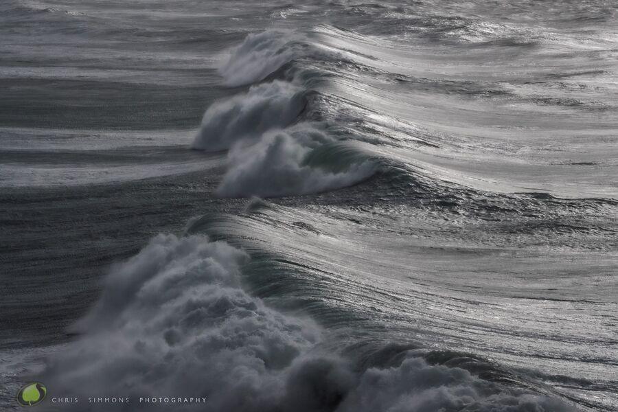Gulls Storm IX