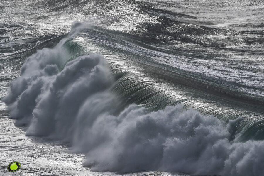 Gulls Storm X
