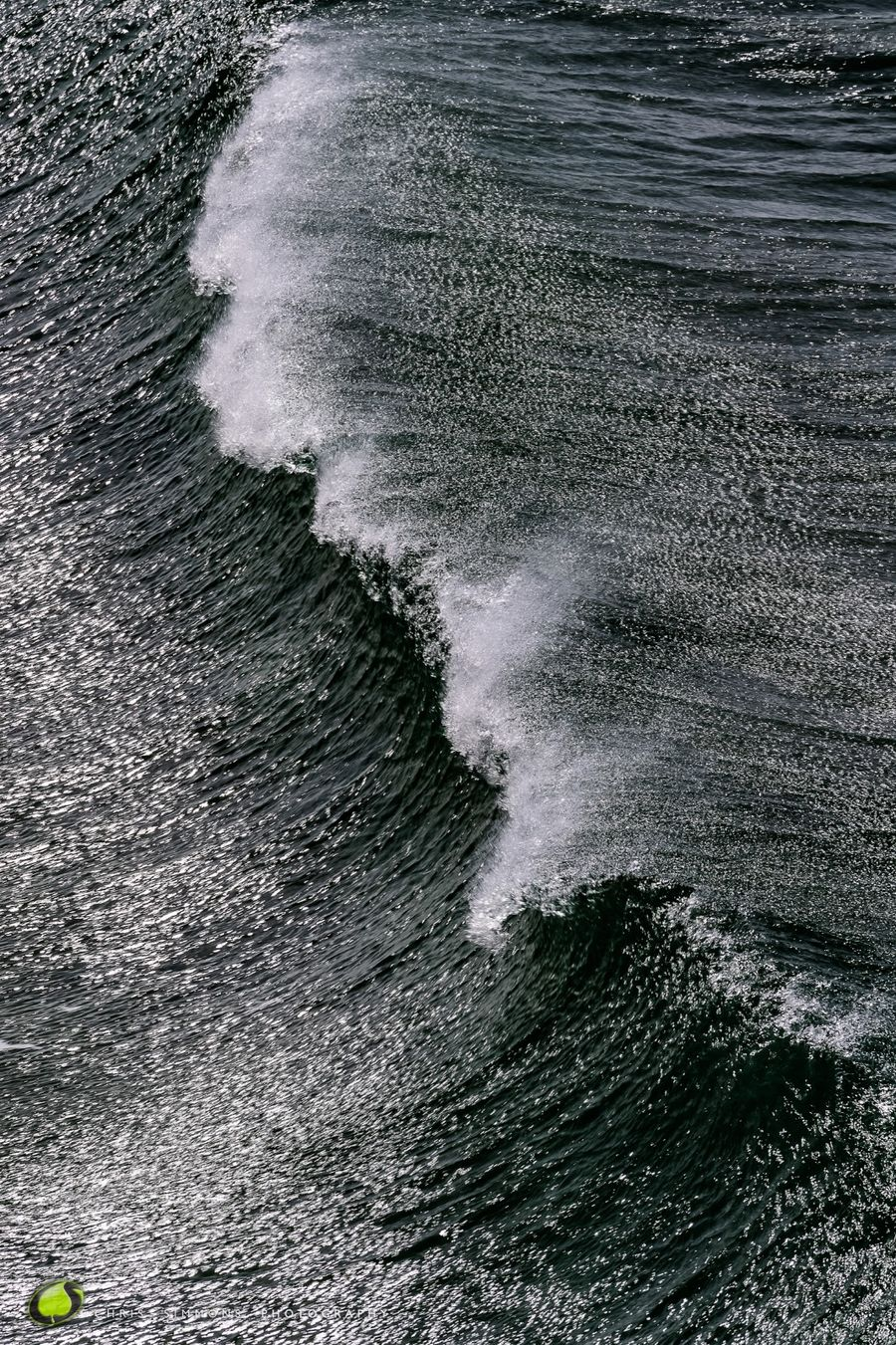 Into The Wave V