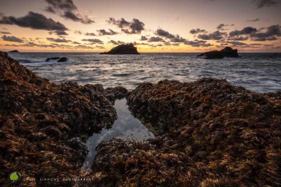 Kelp Blanketted Rocks