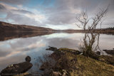 Loch Arianas Dusking - Ardtornish