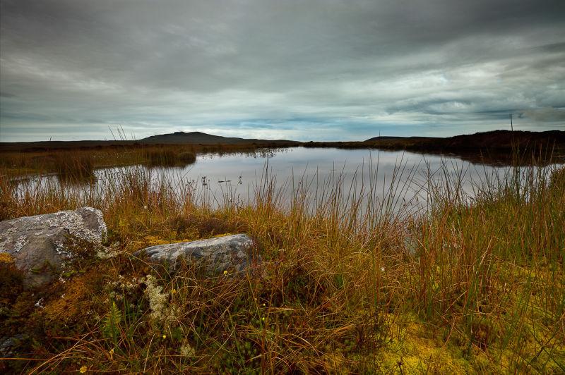 Marshland Pool
